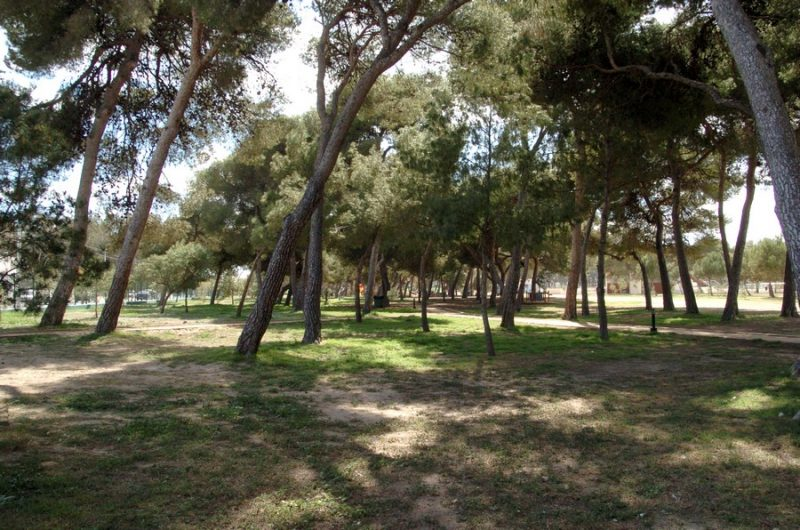 Demanem Un Pla De Recuperació Ambiental Del Parc Del Pinar