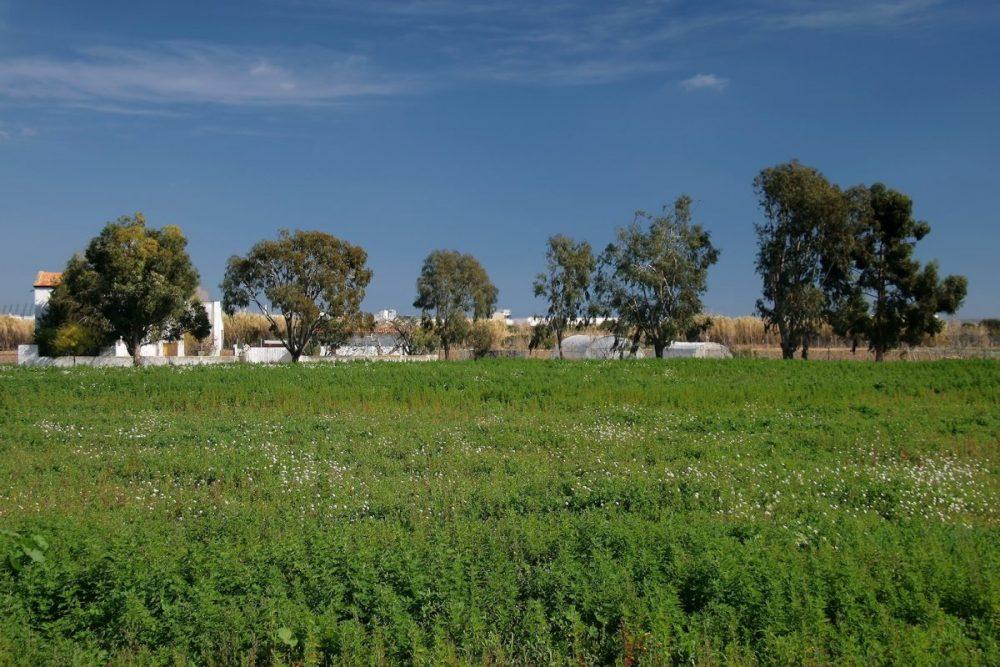 Del Señor: «El Creixement De L'agricultura Ecològica Confirma La Viabilitat D'un Parc Agrari A L'entorn De Castelló»